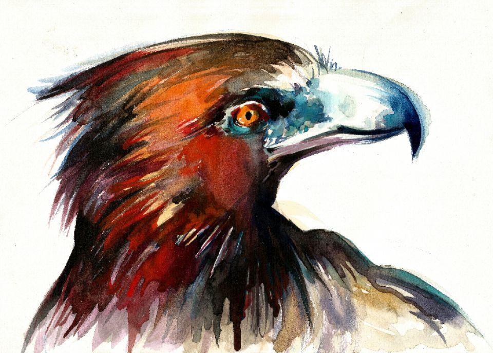 Tablou Acuarela Chip de Vultur